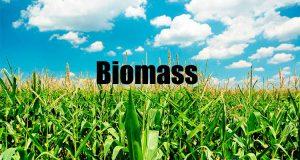 bio mass