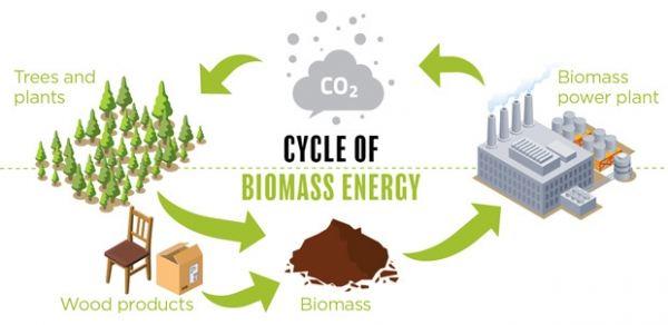 biio mass energy
